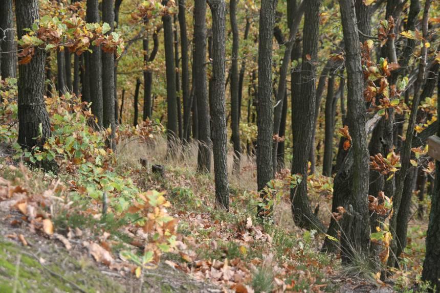 las-jesien-kraina-wygaslych-wulkanow