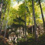 Ścieżka przyrodnicza w Skansenie górniczo-hutniczym w Leszczynie